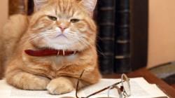 Milovníci koček chytřejší než pejskaři..?