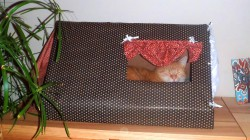 Jak postavit kočce barák – zvládne to každý!