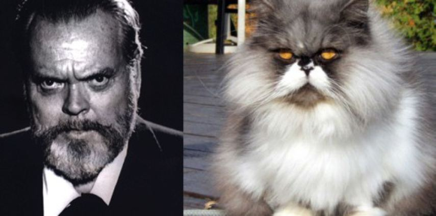 11 cats that have a human twin