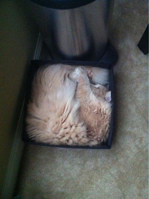cats are liquid14