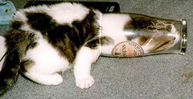 cats are liquid15