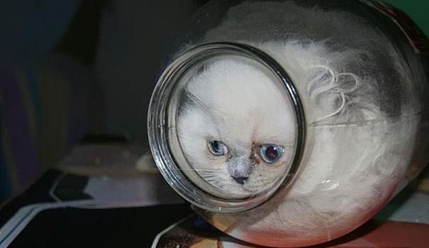 cats are liquid16