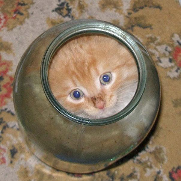 cats are liquid17