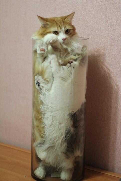 cats are liquid2