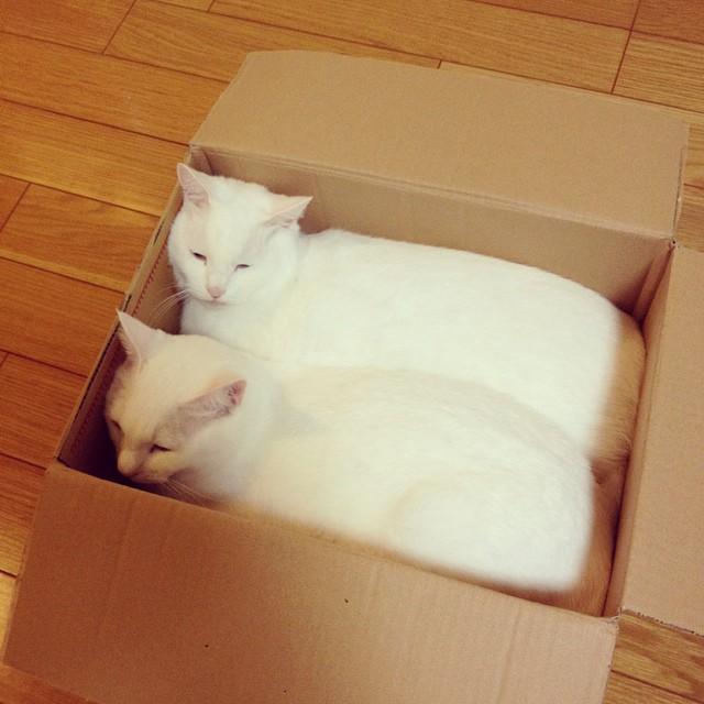 cats are liquid22