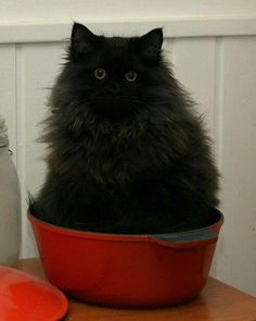 cats are liquid24 pinterest.com