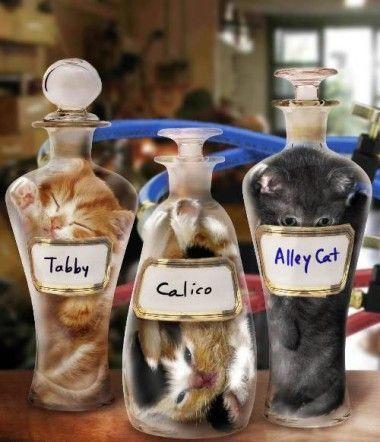 cats are liquid3
