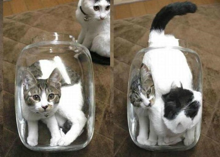 cats are liquid4
