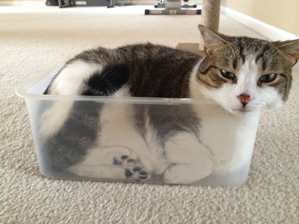 cats are liquid5