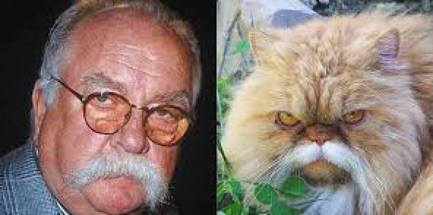 11 koček, které mají lidské dvojníky