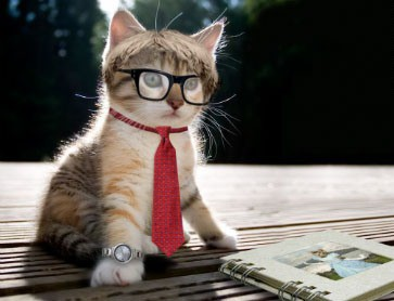 intellectual-cat-small2