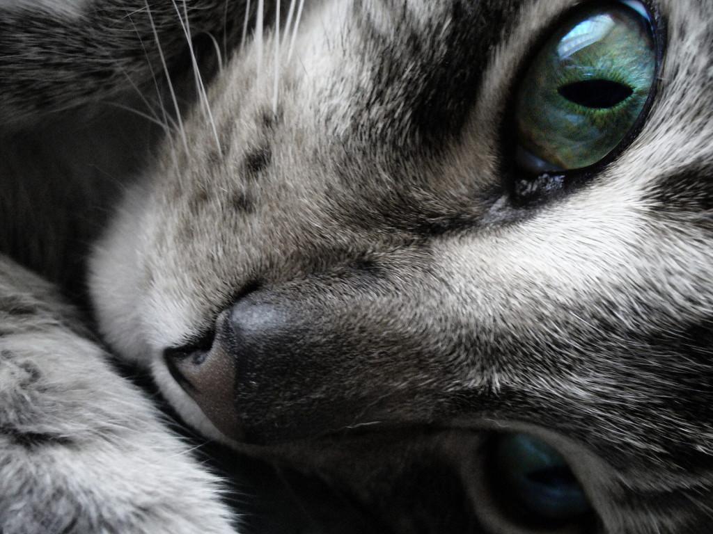 Dreamer_Cat