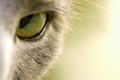 animals macro cat eyes 1920x1280 wallpaper_www.animalhi.com_53