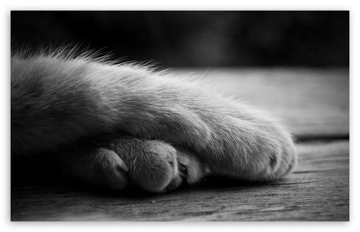 cat_paws_3-t2