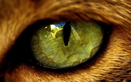 closeup eyes cats animals 1920x1200 wallpaper_www.animalhi.com_52