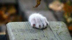 Co dělat, když najdu (opuštěnou) kočku