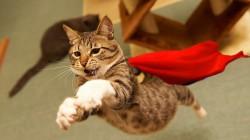 8 největších kočičích hrdinů