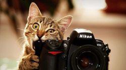 20 divných věcí, co kočky dělají