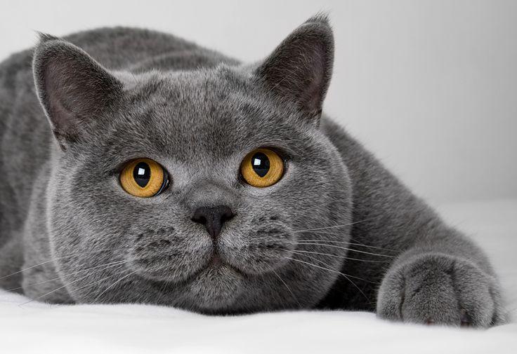 Téměř bez rozdílu to byly velké, tlusté, zdravé kočky s nádherně.