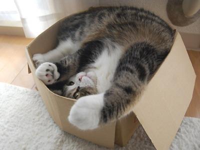 cat-upside-down-in-box