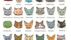 15 nejpopulárnějších plemen koček