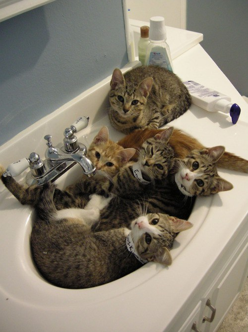 the-world_s-top-10-best-images-of-cats-in-sinks-3