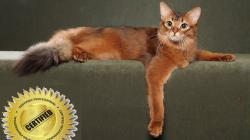 Kotě spapíry nebo bez papírů? 7 rozdílů mezi nimi