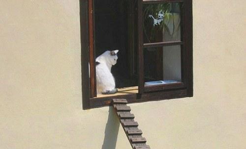 cat-brigde-1