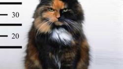 Cat prison diary