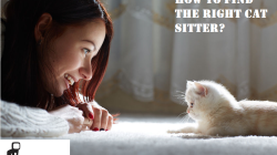 How to find the right cat sitter