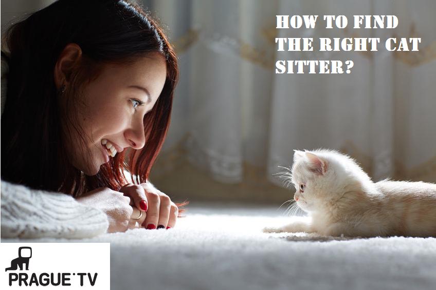 right cat stiter
