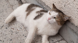 8 tipů, jak zchladit kočku v horku