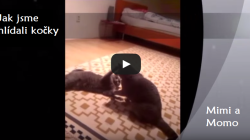 CATS OF OUR CLIENTS: Mimi and Momo – freestyle fight