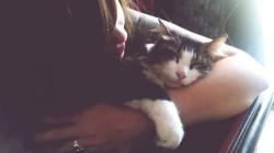 25 znamení, že máte raději kočky než lidi