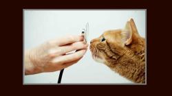 6 nejčastějších zdravotních komplikací u koček