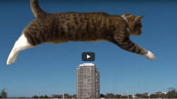 Perfect parkour cat – spectacular show