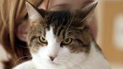 19  nejčastějších chyb, kterých se dopouštějí majitelé koček