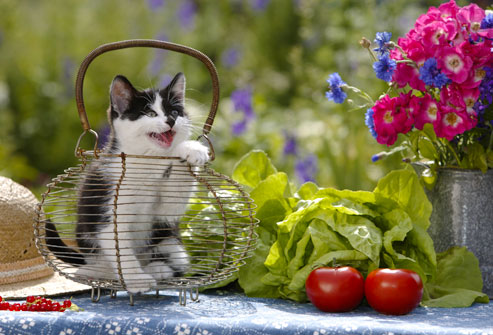 photolibrary_rm_photo_of_cat_on_table