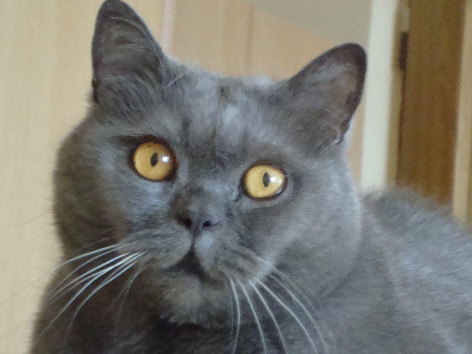 Černé kočičky archivy