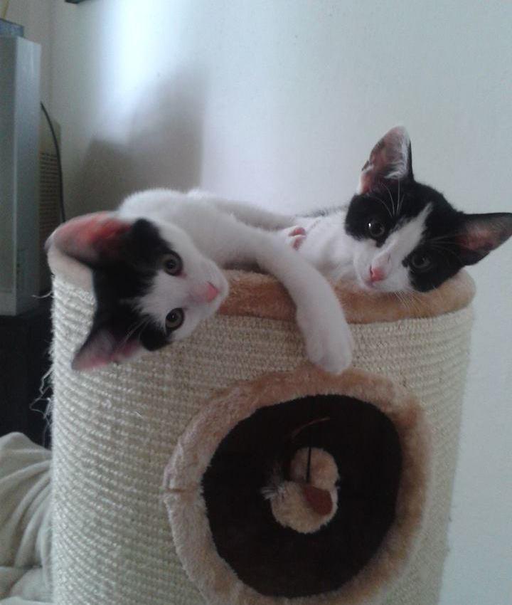 domácí černá kočička fotkynadržený milfs sex