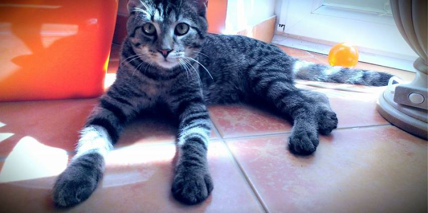 DRUHY KOČKY DOMÁCÍ, aneb jak ovlivňuje barva srsti povahu koček?