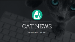MEOW UP TO OUR CAT NEWSLETTER!