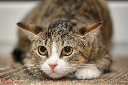 Zdroj: http://www.petsworld.in/blog/wp-content/uploads/2014/11/frightened-cat.jpg