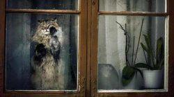 Proč rozhodně nenechávat kočku doma samotnou