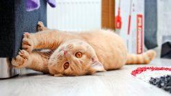 KOČIČÍ DISCIPLÍNA: Jak odnaučit kočky škrábat nábytek
