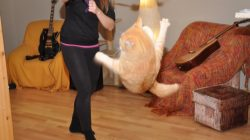 Cat-sitter Nikol trains a flying cat!