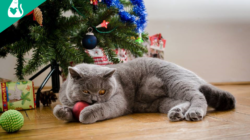 12 reasons why Christmas is better with a cat