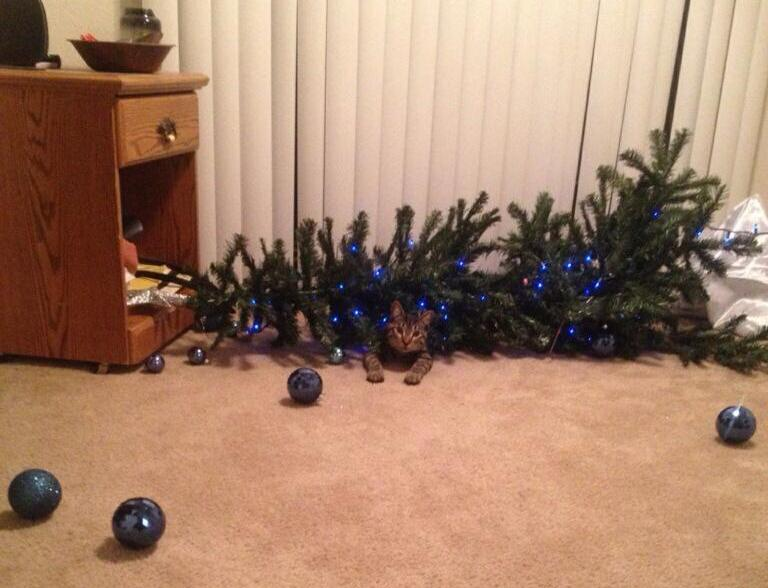 Cat-Knocks-Down-a-Early-Christmas-Tree-So-The-Family-Can-Celebrate-Christmas