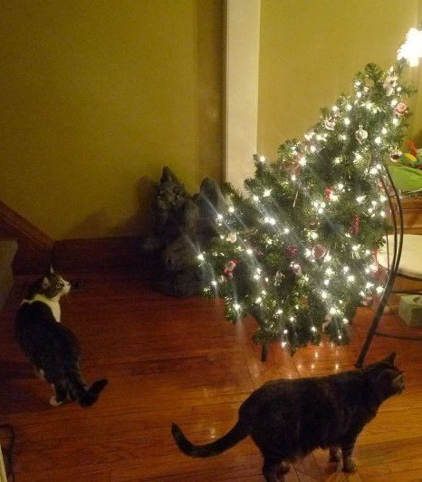 Top-10-Animals-Who-Think-Its-Time-to-Take-Down-The-Christmas-Tree-5