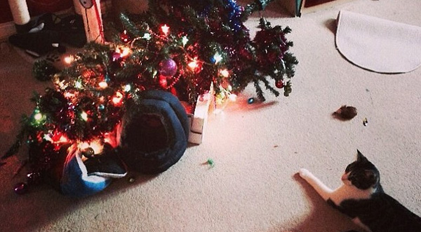 c9qlo-cat-or-christmas-tree